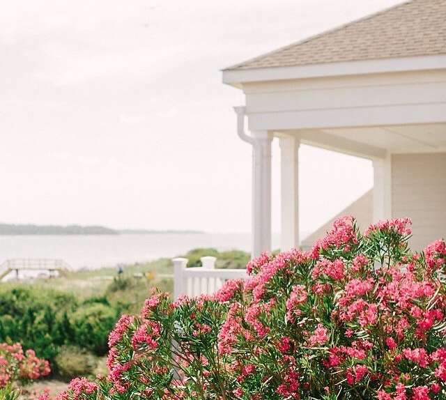 flowers blooming with oceanfront view