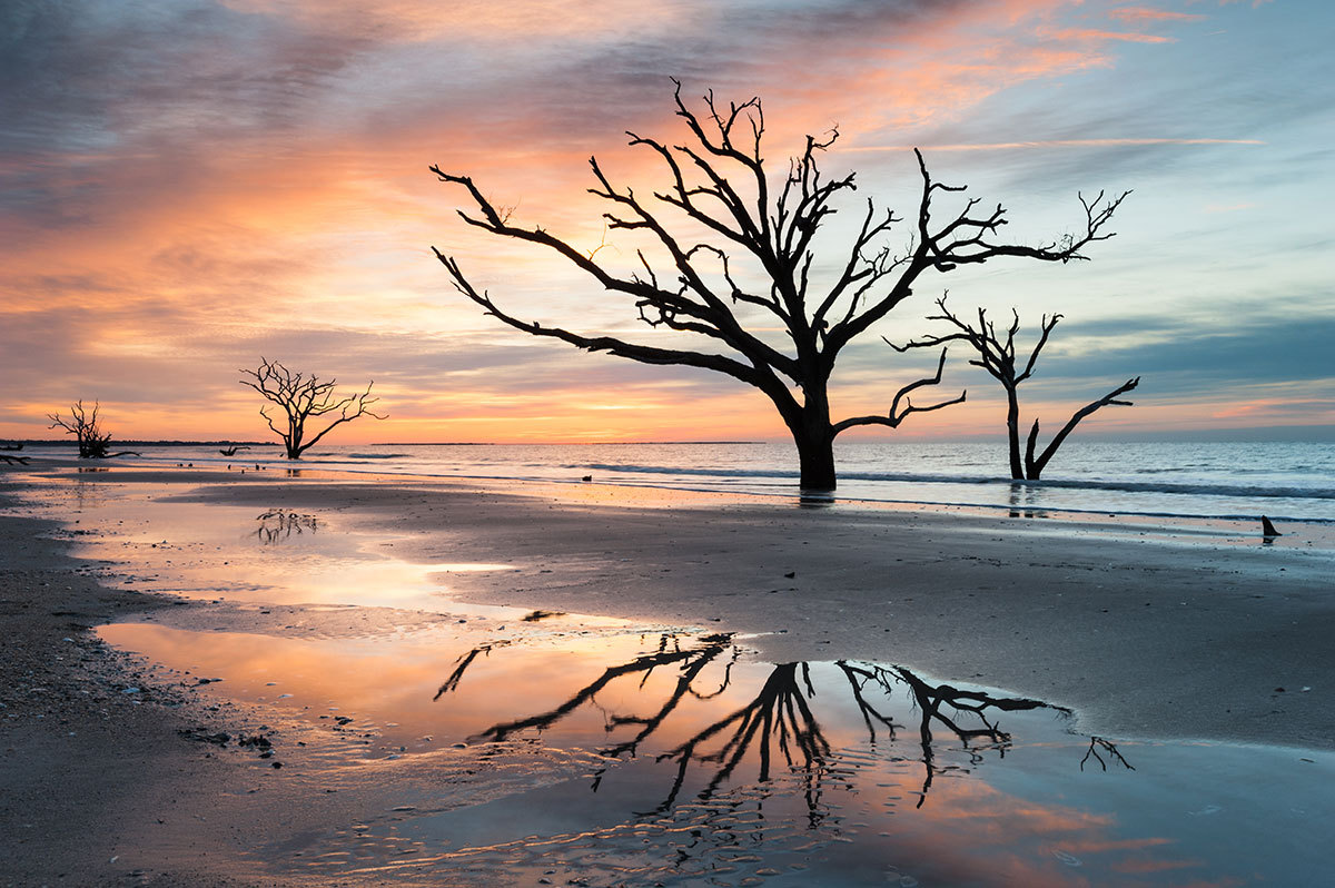 A beach sunset with a beautiful view of a tree
