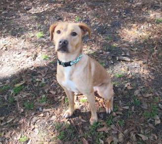 Charleston animal society dog Snapple