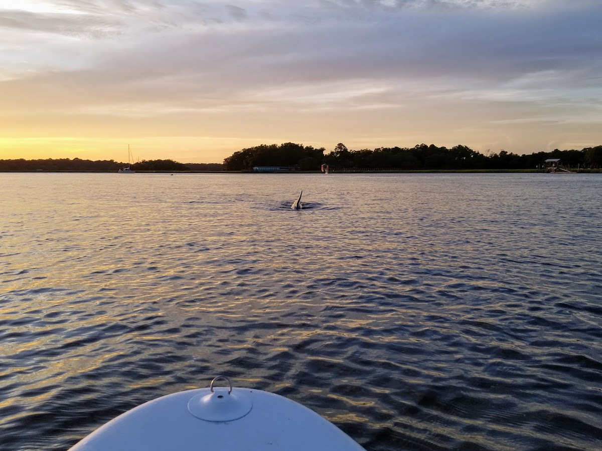 paddleboarding-seabrook