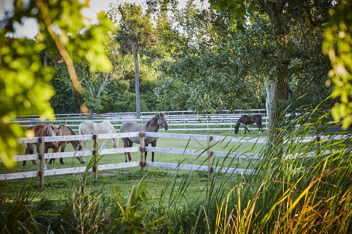 Seabrook horses grazing